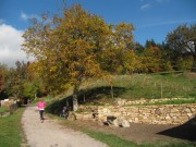 bickenreute-trockenmauer151025