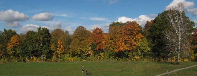 Waldrand im farbigen Herbstlaub bei Freiburg am 26.10.2015
