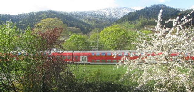 Kirschblüte in Freiburg und Schnee auf den Schwarzwaldbergen am 27.April 2016