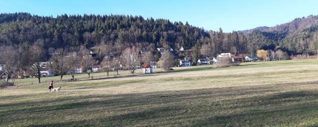 Blick nach Norden zur Steinhalde in Freiburg-Ebnet am 24.2.2019