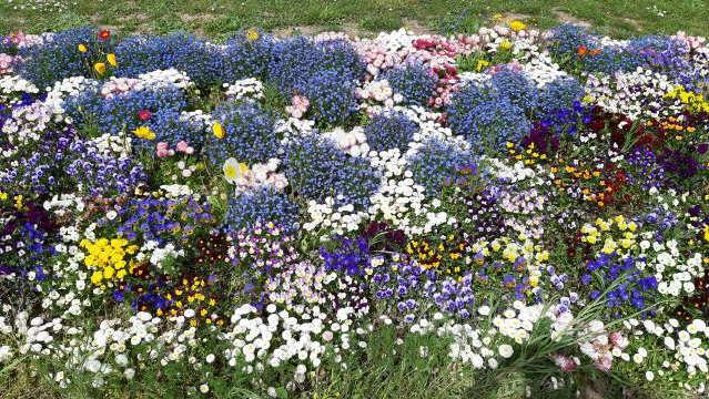 Blumenteppich in Freiburg am 20. April 2019