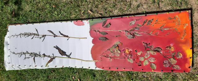 Sun-Print im Garten im Juli 2019: 30 min trocknen in der heißen Sonne