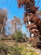 klimadenkmal-kybfelsen20200305