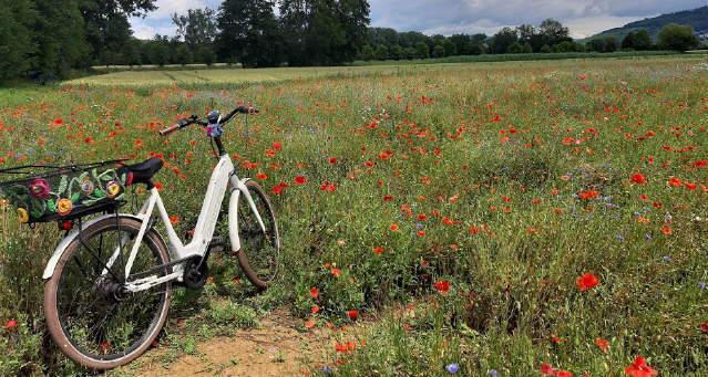 Fahrrad auf dem Mohnfeld am 17. Juni 2020 bei Freiiburg